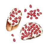 Tostadas de la fruta de la acuarela stock de ilustración
