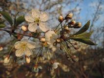 Tot bloei komend, de vroege lente royalty-vrije stock afbeelding