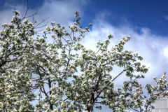 Tot bloei komende appel De tuin van de lente royalty-vrije stock fotografie