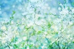 Tot bloei komende appelboom Royalty-vrije Stock Afbeelding