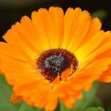 Tot bloei komende bloem stock afbeeldingen