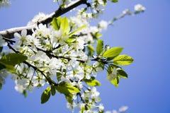 Tot bloei komende bloemen Royalty-vrije Stock Fotografie