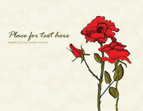 Tot bloei komende bloemen Royalty-vrije Stock Foto's