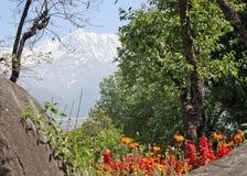 Tot bloei komende bloemen in lentetijd Himalayan royalty-vrije stock afbeeldingen