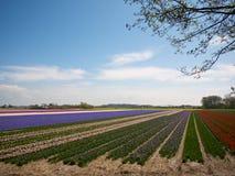 Tot bloei komende bloemen op het gebied Royalty-vrije Stock Foto's