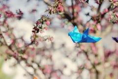 Tot bloei komende bomen Stock Foto