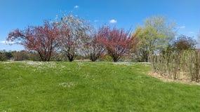 Tot bloei komende bomen Royalty-vrije Stock Foto's