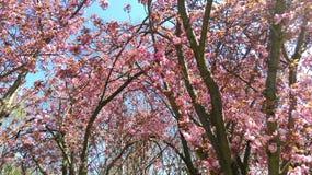 Tot bloei komende bomen Stock Foto's