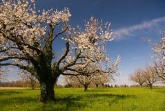 Tot bloei komende bomen in de lente. royalty-vrije stock foto's