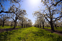 Tot bloei komende bomengras en hemel Royalty-vrije Stock Afbeelding