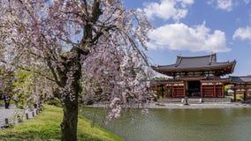 Tot bloei komende boom bij de byodo-binnen Tempel in Uji, Kyoto, Japan in lentetijd stock afbeelding