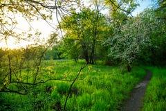 Tot bloei komende boom door de bos buigende weg stock afbeelding