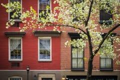 Tot bloei komende boom, flatgebouw, de Stad van Manhattan, New York Stock Foto's