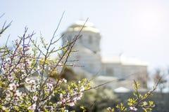 Tot bloei komende boom tegen de achtergrond van de gouden koepel voor Pasen royalty-vrije stock afbeelding
