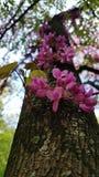 Tot bloei komende boomboomstam Stock Afbeeldingen