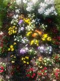 Tot bloei komende de lentebloemen op een bloembed Stock Foto's