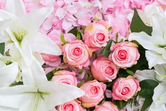 Tot bloei komende gevoelige rozen, bloeiende bloemen feestelijke achtergrond royalty-vrije stock foto