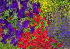 Tot bloei komende heldere bloemen op een bloembed in de heldere zonlichtclose-up stock foto's