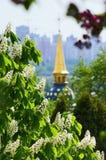 Tot bloei komende kastanje dichtbij het klooster stock foto's