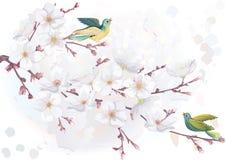 Tot bloei komende kersenboom Royalty-vrije Stock Afbeeldingen