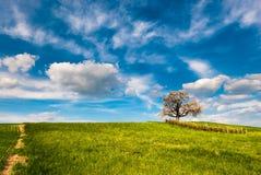 Tot bloei komende kersenboom royalty-vrije stock foto's
