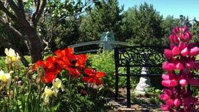 Tot bloei komende kleurrijke bloemtuin in de zomer met roze, rode en gele bloemen stock videobeelden