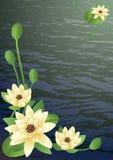Tot bloei komende lelies stock illustratie