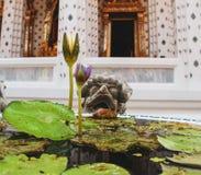 Tot bloei komende lotusbloembloem in boeddhistische tempel royalty-vrije stock foto's