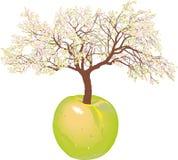 Tot bloei komende nieuwe appelboom Stock Foto's