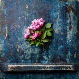 Tot bloei komende tak van Roze appelboom Stock Afbeelding