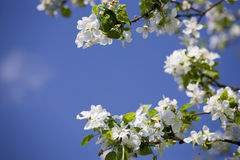 Tot bloei komende tuin Royalty-vrije Stock Afbeeldingen