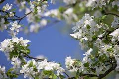 Tot bloei komende tuin Stock Afbeelding