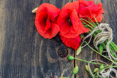 Tot bloei komende wilde papavers op de donkere houten achtergrond behang Royalty-vrije Stock Foto's