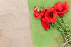 Tot bloei komende wilde papavers op een lichte achtergrond Royalty-vrije Stock Foto