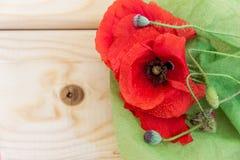 Tot bloei komende wilde papavers op een lichte houten achtergrond Behang, Stock Foto's