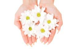 Tot een kom gevormde handen met bloemen Stock Afbeelding