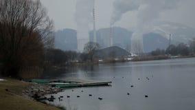 Totaal van het meer met eenden voor de fabrieken wordt geschoten die stock footage