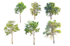 Total Group tree Stock Photos