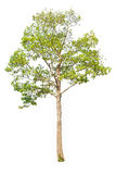 Total Group tree Stock Image