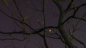 Total lunar eclipse, January 31, 2018, time-lapse photography.The blood moon stock footage