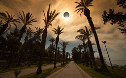 Total solar eclipse, palm avenue in resort city. Amazing scientific background - total solar eclipse in dark red glowing sky, mysterious natural phenomenon when royalty free stock photo