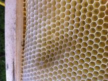 Totaly natural bee wax. On the wooden frame Royalty Free Stock Photography