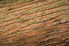 Totara barkentyny tekstura Obraz Stock