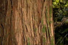 Totara tree bark Stock Photo