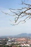 Tote alte Baum- und Stadthintergrundunschärfe auf blauem Himmel Lizenzfreie Stockfotos