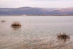 Tote Anlagen auf dem Toten Meer, Israel Lizenzfreie Stockbilder