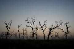 Tote Bäume Lizenzfreies Stockfoto
