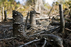 Tote Bäume Stockfotos