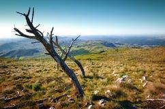 Tote Bäume Lizenzfreie Stockfotografie