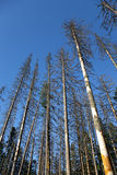 Tote Bäume stockfoto